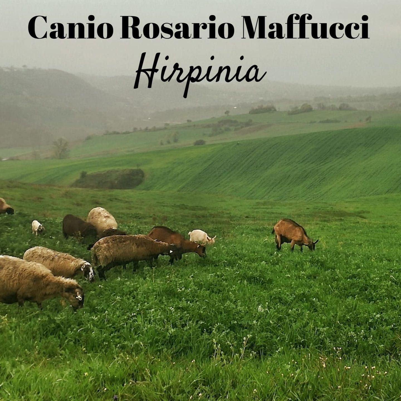 Canio Rosario Maffucci